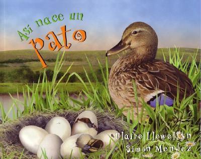 Asi nace un pato By Llewellyn, Claire/ Mendez, Simon (ILT)